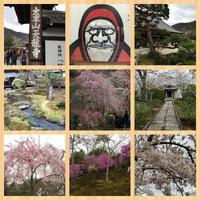 樱花樱花2.jpg