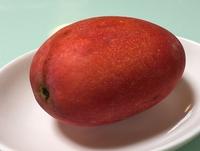 水果随笔1.jpg