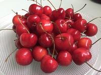 水果随笔5.jpg