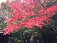 红叶2016 1.jpg